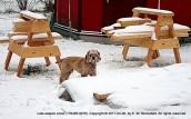 Thaddeus in Snow