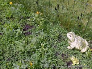 Amphibians in the Wildflower Garden
