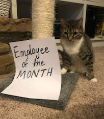 The Mom Huddle Meet My Co-Workers: Employee of the Month sign with cat Thor