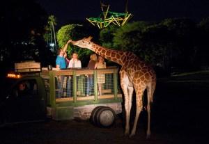 Let's Go on a Valentine's Day Safari