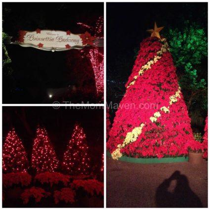 Poisettia Parkway-Busch Gardens