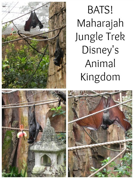 bats-maharajah jungle trek-animal kingdom
