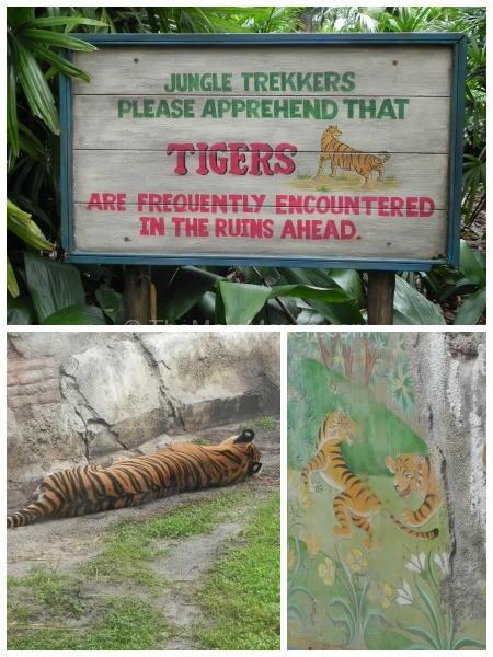 tigers-maharajah jungle trek-animal kingdom