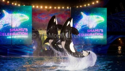Summer Nighttime Fun at SeaWorld and Aquatica