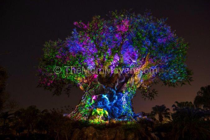 Tree of Life Awakens at Disney's Animal Kingdom this summer