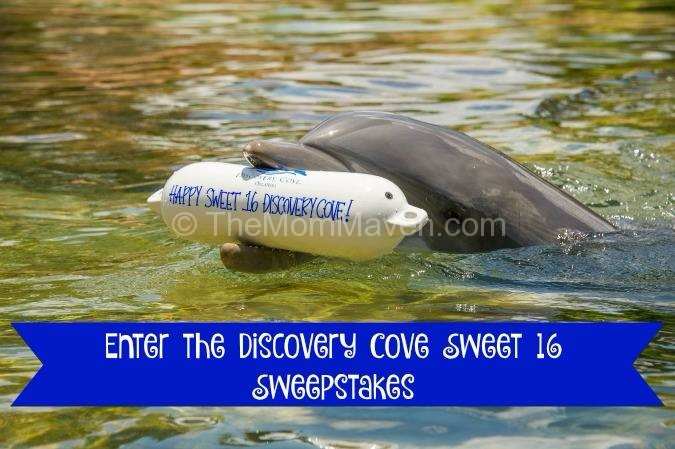 Discovery Cove Sweet 16 Sweepstakes