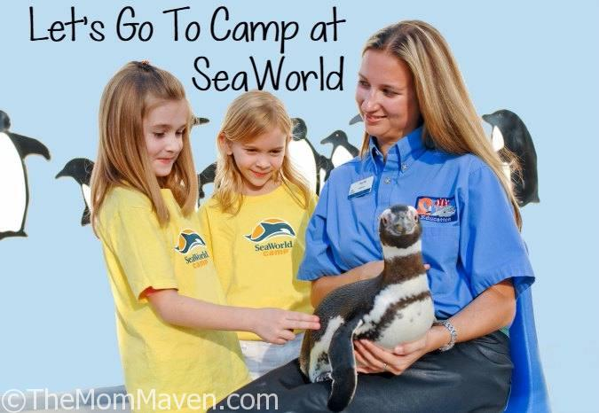 SeaWorld Camps provide a learning environment that fosters exploration and self-discovery