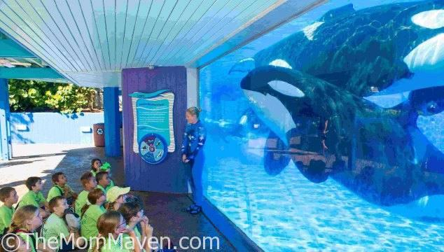 Each week, campers are immersed in the wonders of the sea through exclusive behind-the-scenes opportunities and educational sessions along with the opportunity to experiences SeaWorld's amazing attractions, rides and shows.