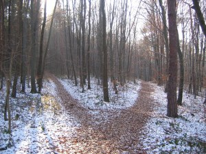 forest-path-238887_640_4dec16