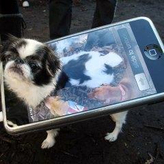 À la carte or Buffet – The $20 Cell Phone Plan