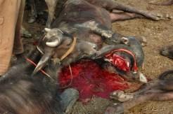 Witness to a bloodbath3