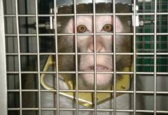 580_2D00_monkey_2D00_frik_2D00_2