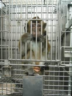 sad_monkey__1418848140_144.223.39.42