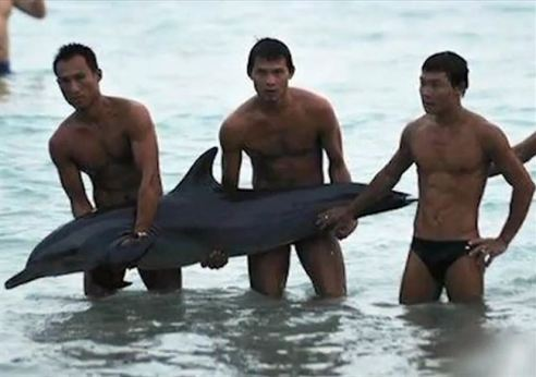 tourists-postdying-dolphin1-_t4yg