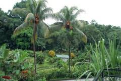 Lush tropical foliage surrounding the Rhum J.M distillery. Credit: Julie Kalan