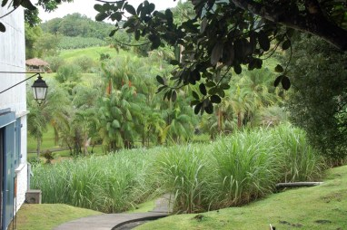 The tropical garden and small sugar cane field along the tour route at Habitation Clément. Credit: Julie Kalan