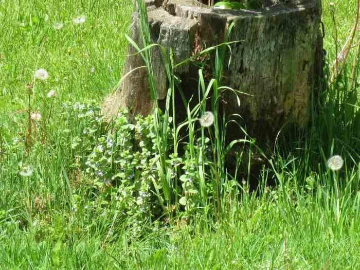 A random tree stump.