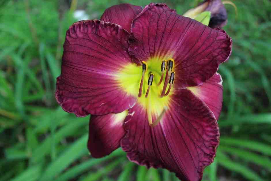 Flower in the memorial garden in Schoharie, NY