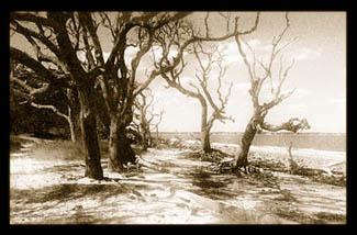 God's Chillun Trees