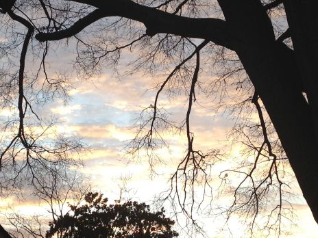 Spooky Georgia Tree Branches at Sunset