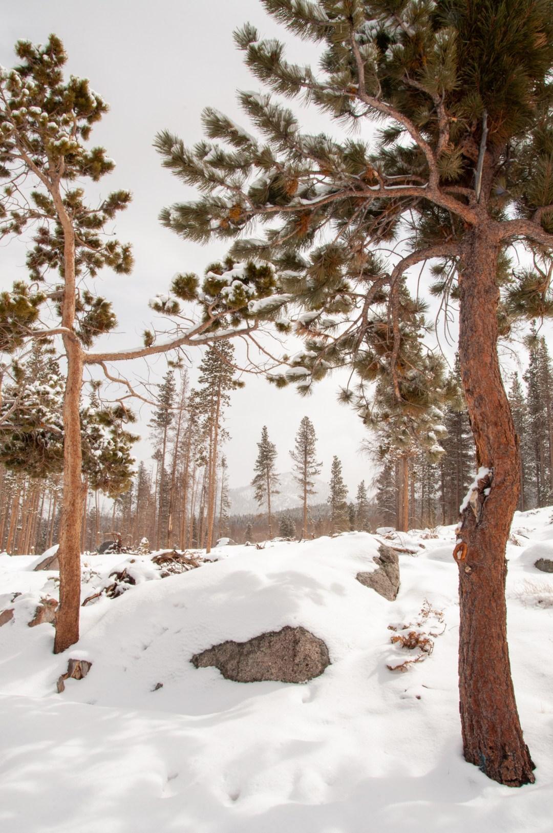 Rocky Mountain National Park, 2021