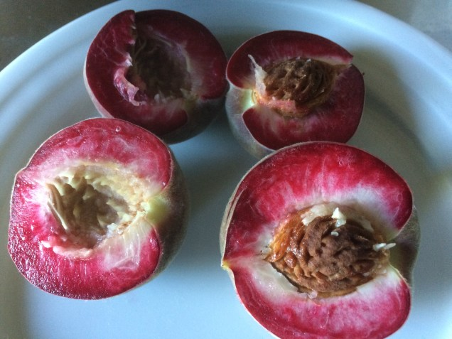 Blood peaches are very tasty