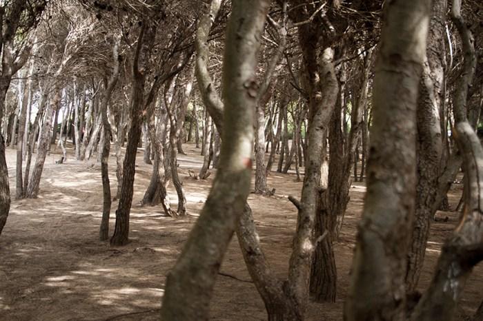 Woodland3