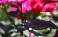 flying-bee-flat