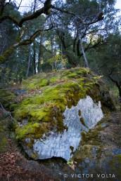 Moss-covered boulder, Bridalveil Falls