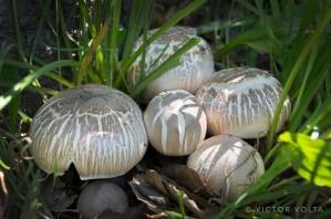 Late season wild mushrooms