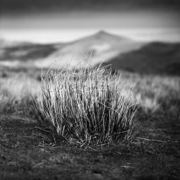 With Sugar Loaf as a backdrop. Brecon Beacons.
