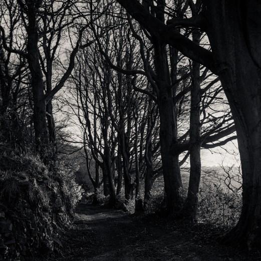 Down a secret path near Devauden, Monmouthshire.