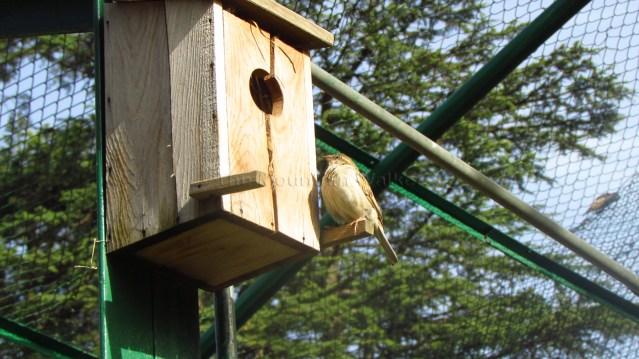 Himalayan Bird Park 05