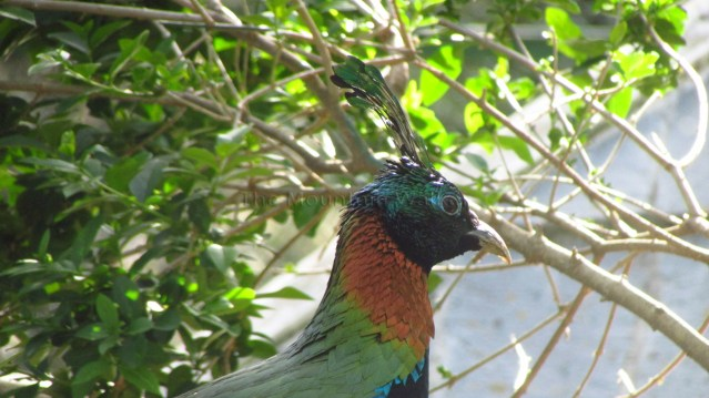 Himalayan Bird Park 09