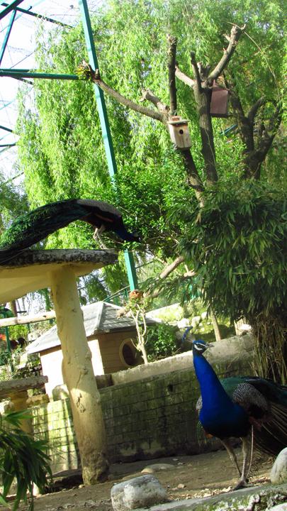 Himalayan Bird Park 10