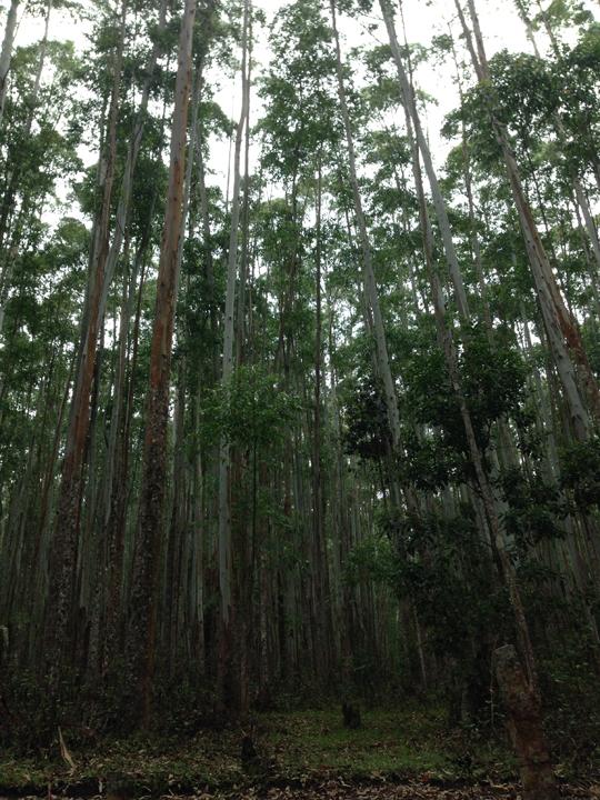 Shola National Park 04