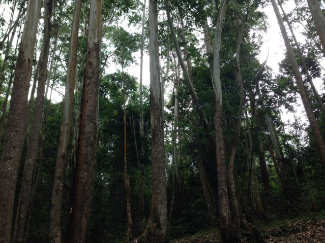 Shola National Park 05