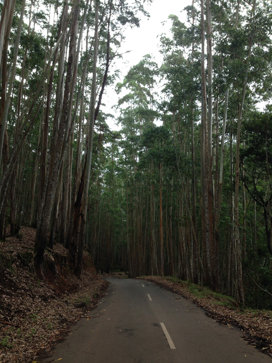 Shola National Park 06