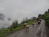 Mountain Walks; Photo: Aditya Luktuke