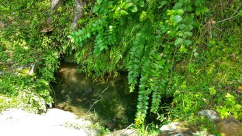 A pool of refreshing, cold, mountain stream water under the Khanoor Tree; Photo: Ameen Shaikh
