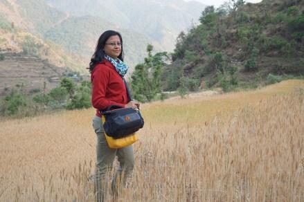 Amidst the wheat fields; Photo: Abhinav Kaushal