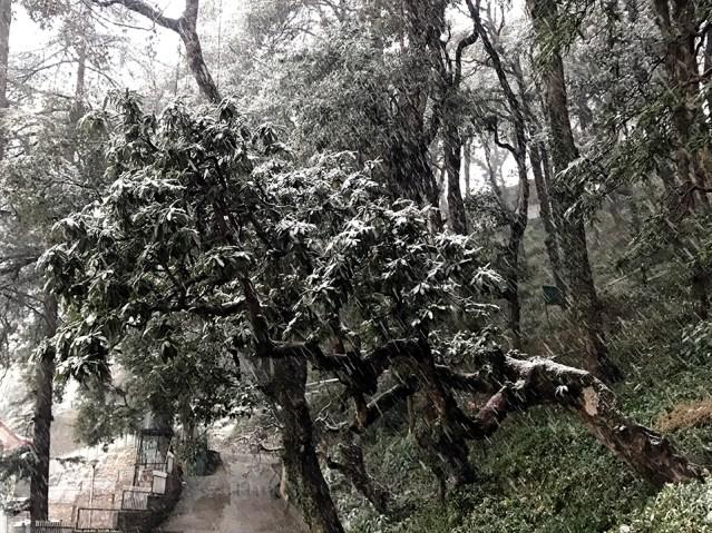WM Shimla First 2018 Snowfall 03