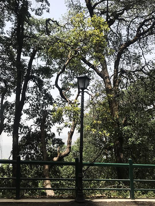IIAS Shimla Walk 03