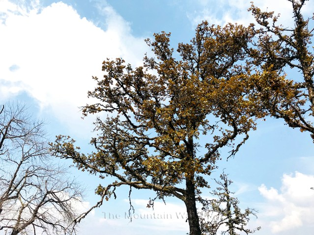 WM Chandrakhani Forests 12