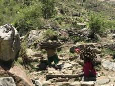 The women carrying wood that will be dried and used in the winters; Photo: Swarjit Samajpati