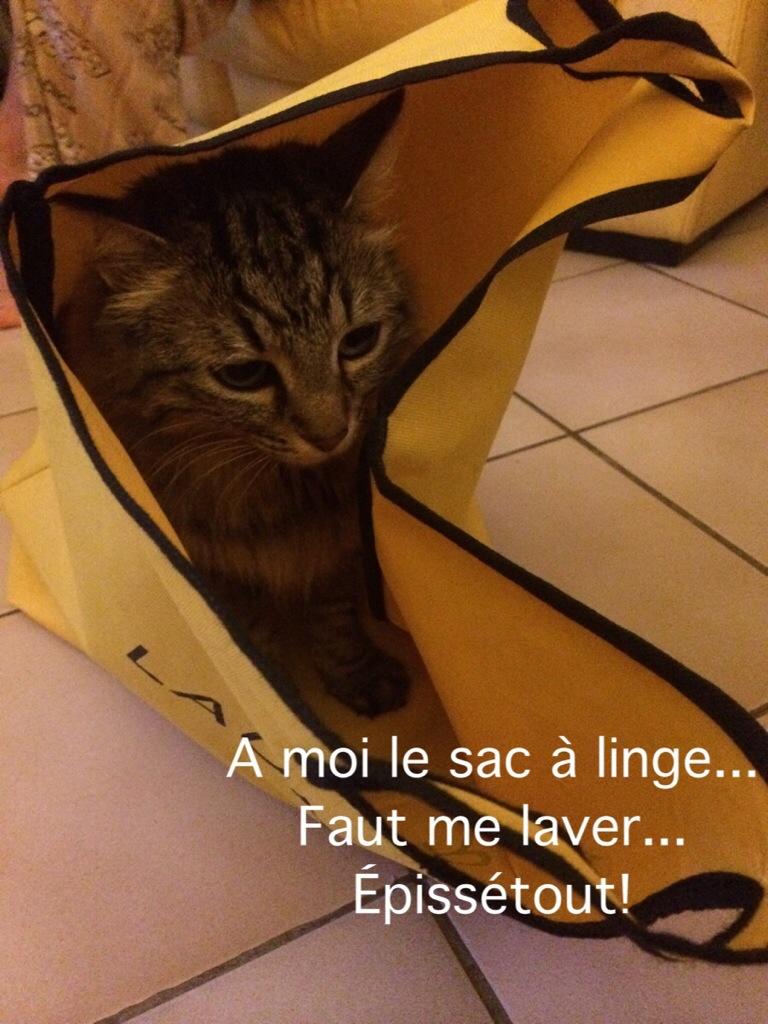 Vie de chat…