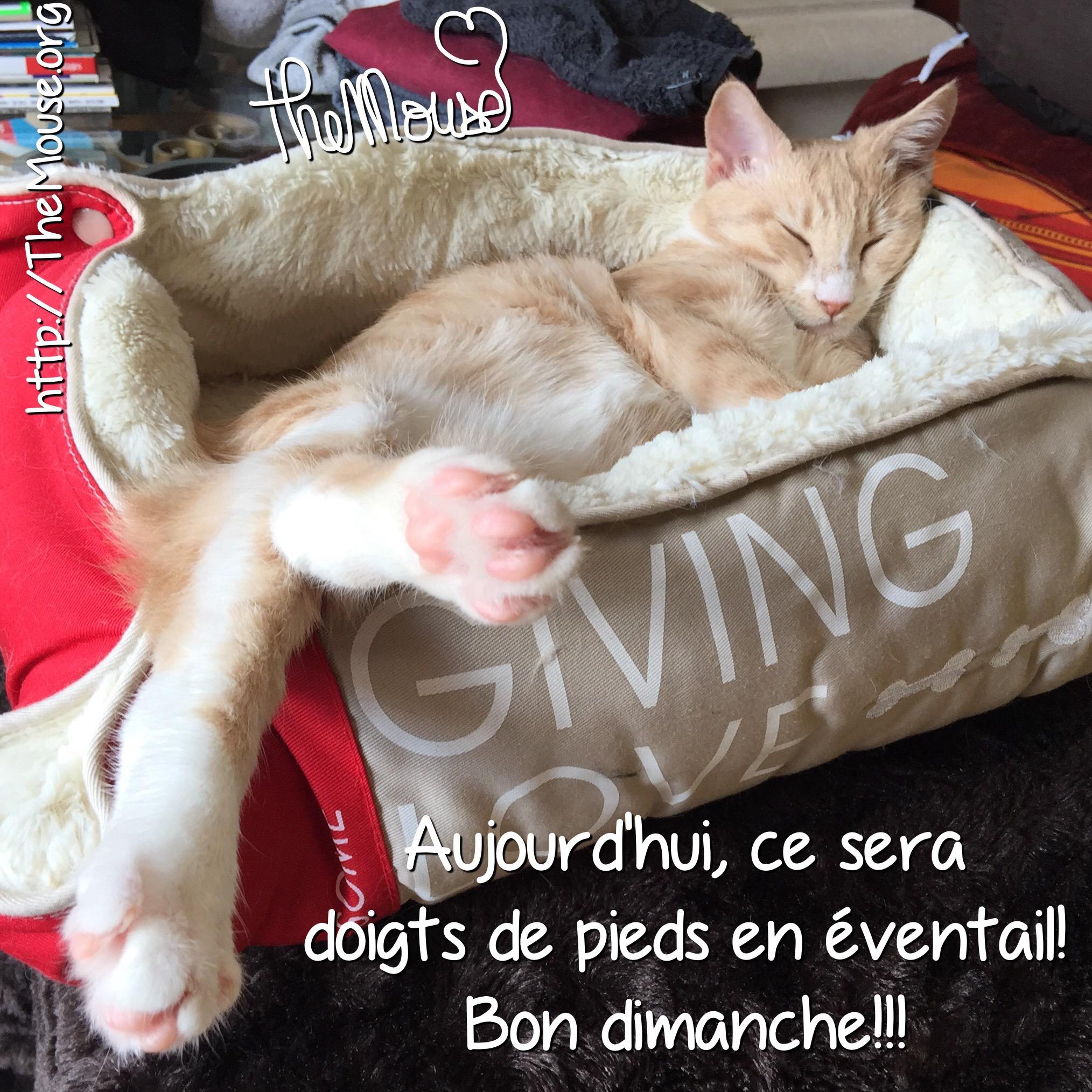 Vie de chat: Prada vous souhaite un bon dimanche! | Les quinquas re-belles