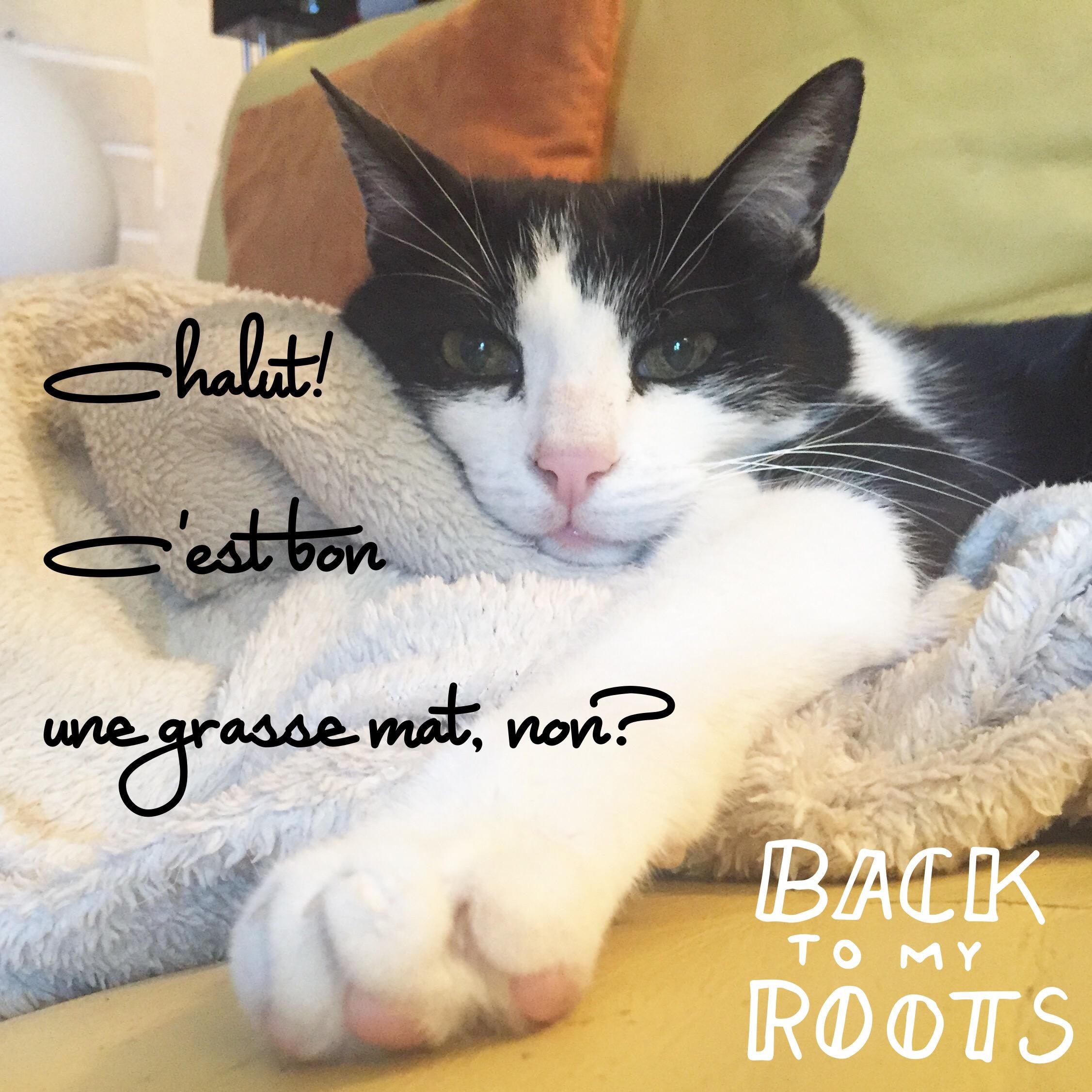 Vie de chat: Flip fan de grasse mat!