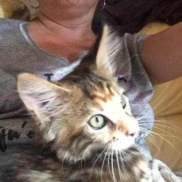 Vie de chat: bienvenue Mamour