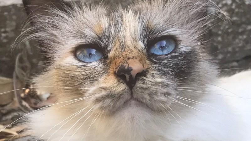 Lundi Soleil 21 Aout 2017… Miaou!